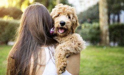 Despre câini